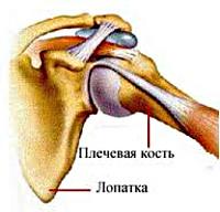 Артрит лопаточно плечевого сустава эндопротезирование сустава локтевого сустава