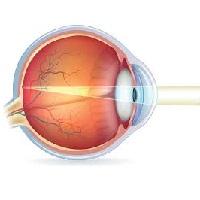 Что нужно есть из овощей чтобы улучшить зрение