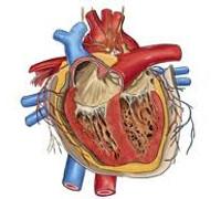 Сочетанные пороки сердца - причины, симптомы, диагностика и лечение