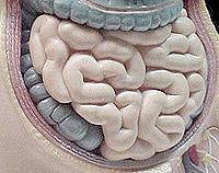 Энтерит - причины, симптомы, диагностика и лечение