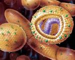 Симптомы желтушного периода вирусных гепатитов thumbnail