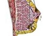 Лечение туберкулез молочных желез thumbnail