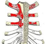 Что такое перихондрит реберно-грудинного сочленения или болезнь Титце