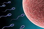 Лечение мужского бесплодия: советы, средства и методы
