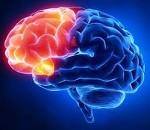 Повреждение лобных долей мозга последствия