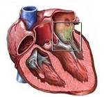 Перикардит при пороке сердца Эндокардит при ревматизме