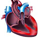 Симптомы и лечение воспаления сердечной мышцы