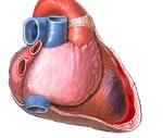 Синдром Дресслера в кардиологии: современная диагностика и лечение