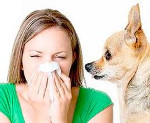 Анализ на аллергию на домашних животных