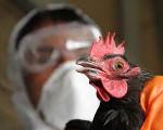 Грипп птиц лечение