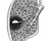 Абсцесс легкого симптомы причины лечение