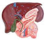 Острый холецистит - причины, симптомы, диагностика и лечение