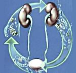 Диагноз инфекция мочевыводящих путей