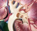 Вазоренальная гипертензия лечение
